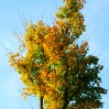 Bunter Baum